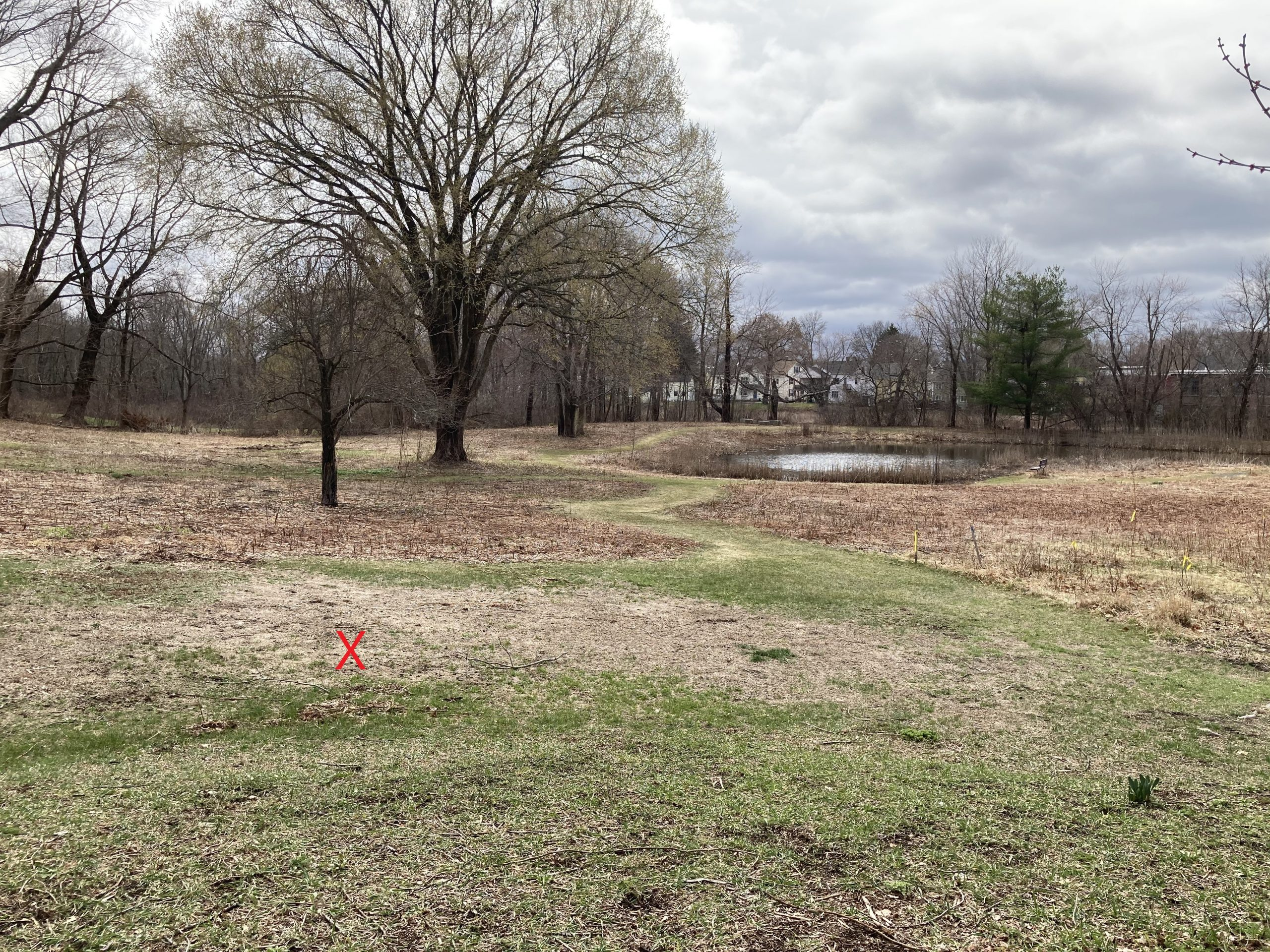 Art site marked by X facing South towards Ipswich river and Sally's pond